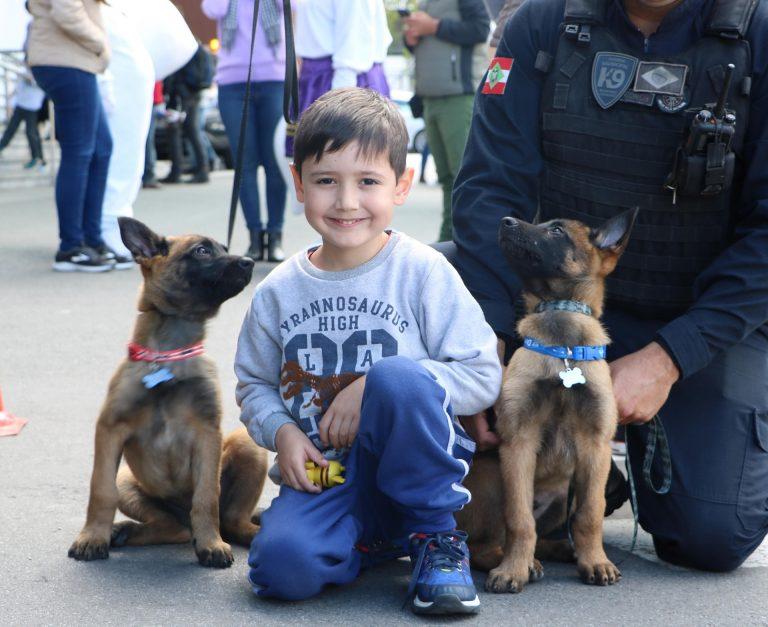 K9 BC: cães realizam ações educativas e abordagem
